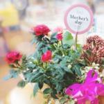 グループホーム 母の日 花